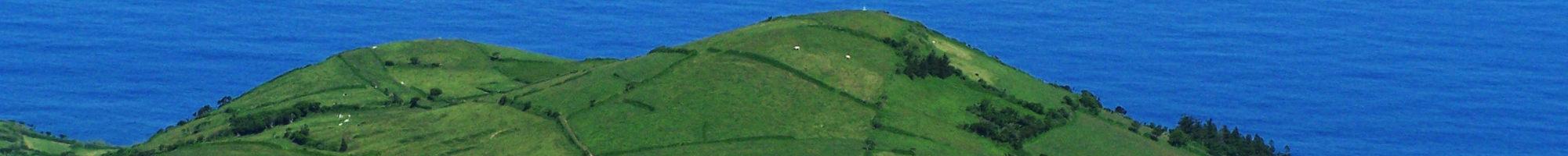 Weiden auf den Azoren