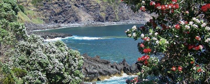 Wandern, Wale und Vulkane