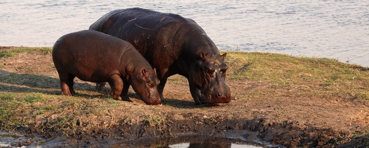 Naturreise Etosha, Okavango, Viktoria-Fälle