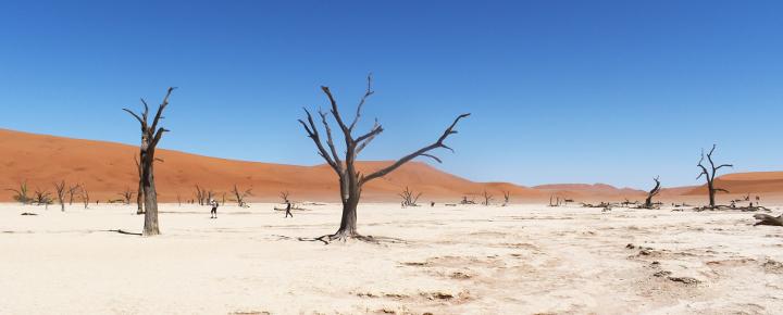 Kalahari, Sossusvlei & Etosha