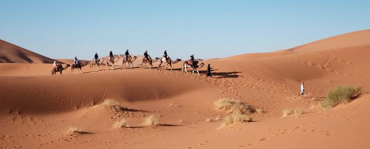 Sahara Kameltour