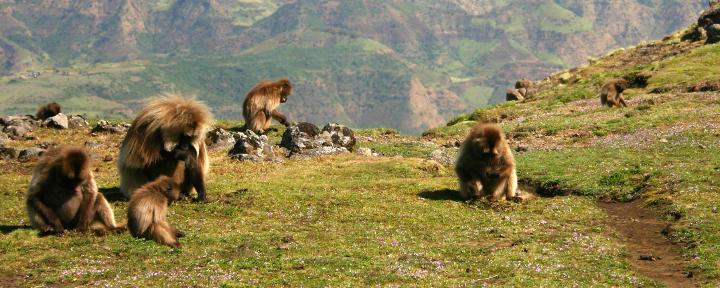 Kulturreise und Baden auf Sansibar