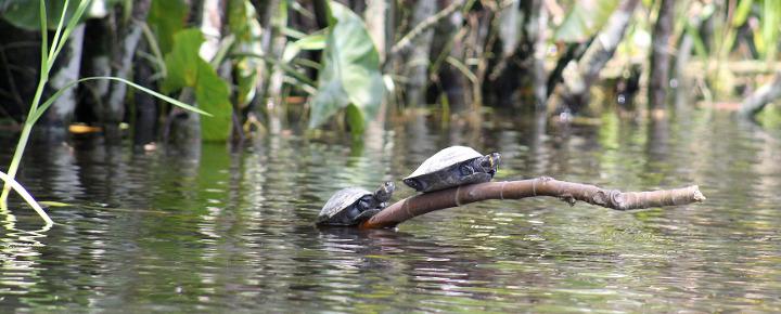 Amazonas-Kreuzfahrt