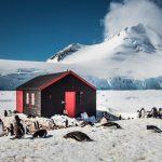 Antarktische Halbinsel, Port Lockroy, Eselspinguine vor der Hütte