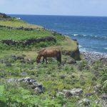Sao Jorge Nordküste Pferd