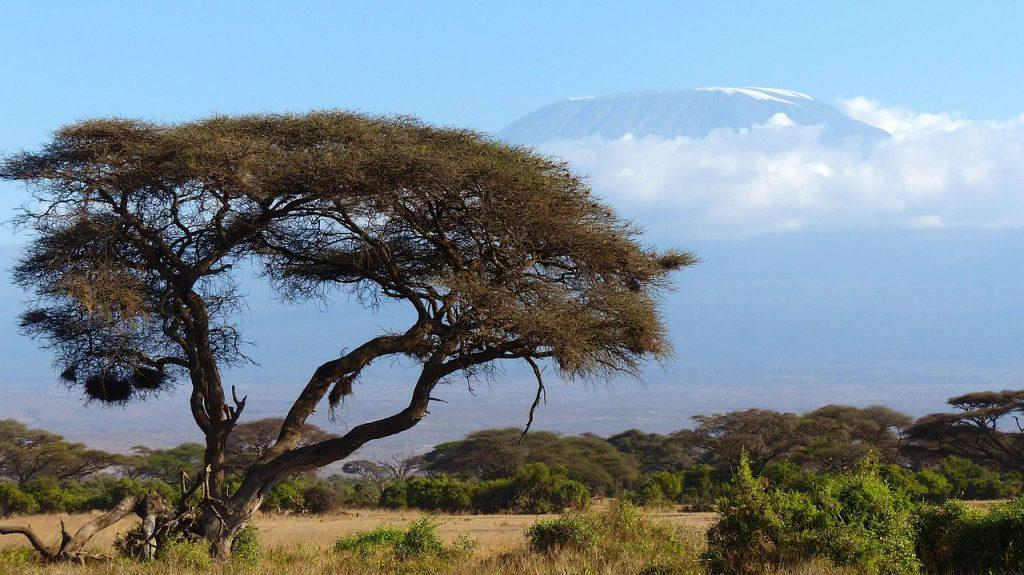 Blick vom Amboseli Nationalpark (Kenia) aus auf den Kilimandscharo