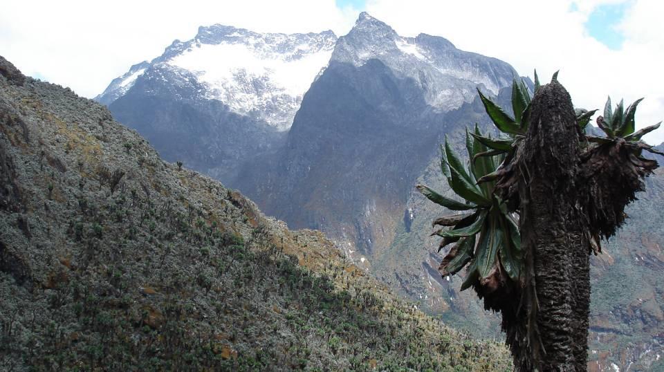 Ruwenzori, Mt. Speke vom Central Circuit in Uganda aus gesehen, zwischen Bujuku Hut und Scott Elliott Pass