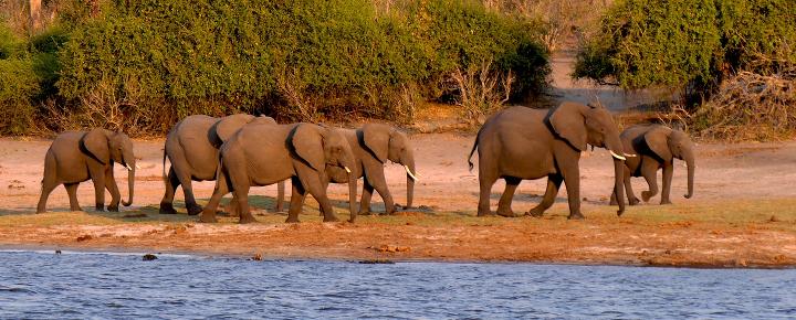 Safari im Okavango-Delta und Chobe Nationalpark