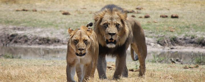 Höhepunkte Südliches Afrika