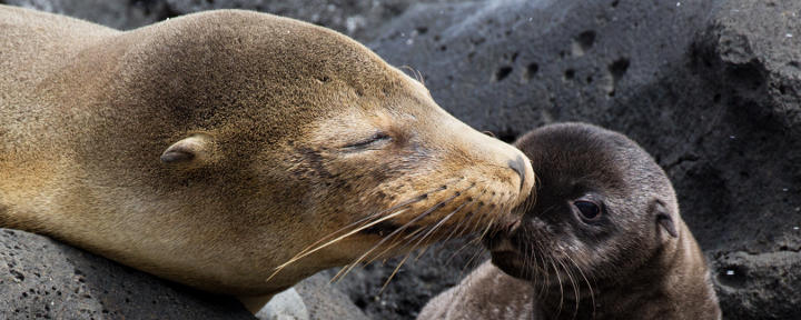 Privatreise Ecuador & Galapagos
