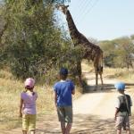 Giraffe - Kinder