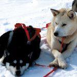 Huskies Pause