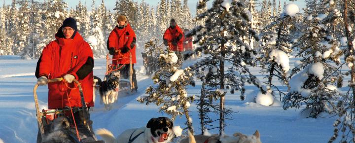 Wildnistour mit Schlittenhunden