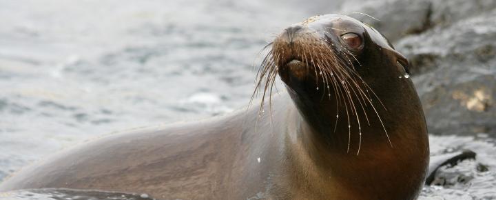 Naturstudienreise durch Galapagos