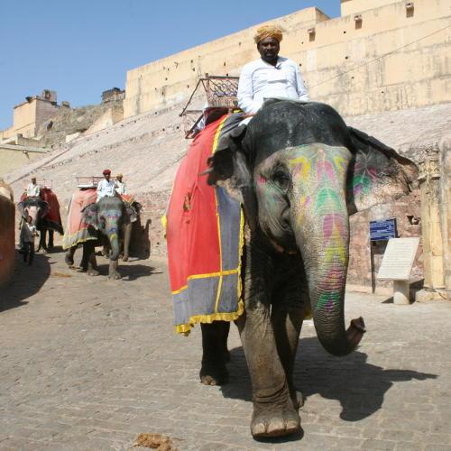 Jaipur: Fort Amber