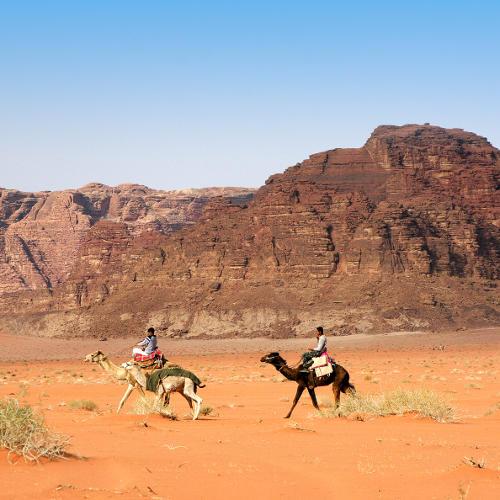 Kamele und Reiter