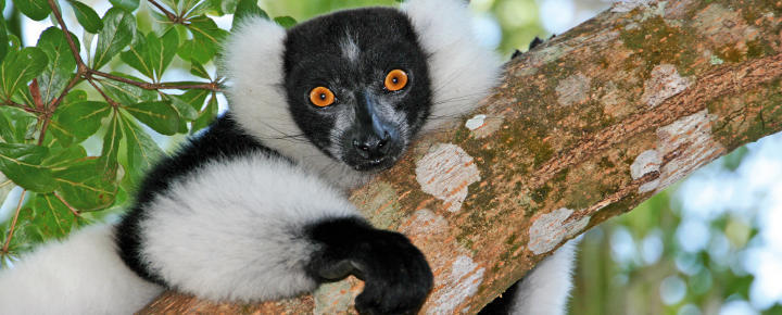 Baobabs, Lemuren, Chamäleons und Regenwald
