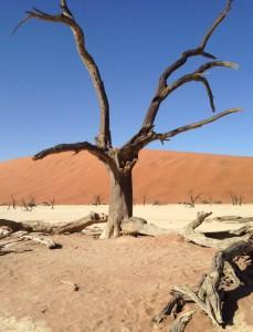 Vertrocknete Akazie in der Sossusvlei in Namibia