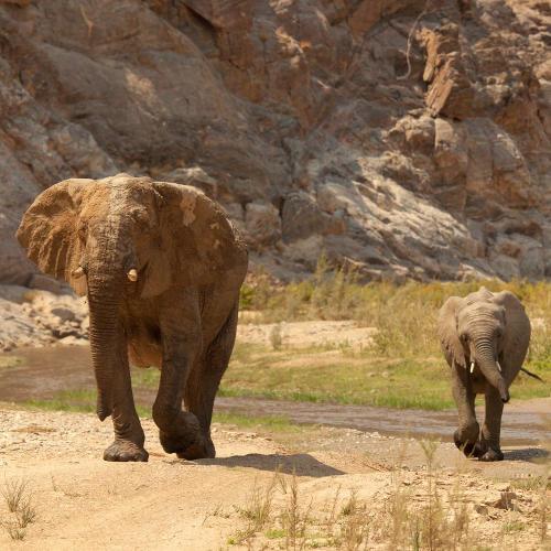 Elefantenmutter mit Kind