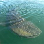 Mexiko - Aktivreisen - Wale und Wandern in Baja California