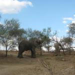 Sambia - Naturreisen - Safari Luangwa-Fluss und Victoria Falls