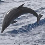 naturreisen-whalewatching-schwimmen-mit-delphinen