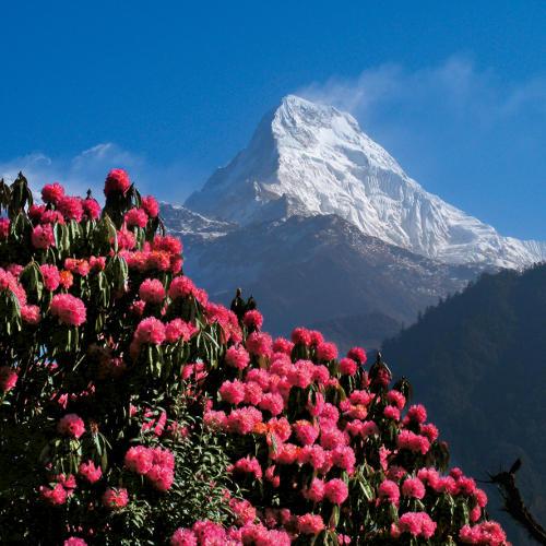 Gipfel des Annapurna