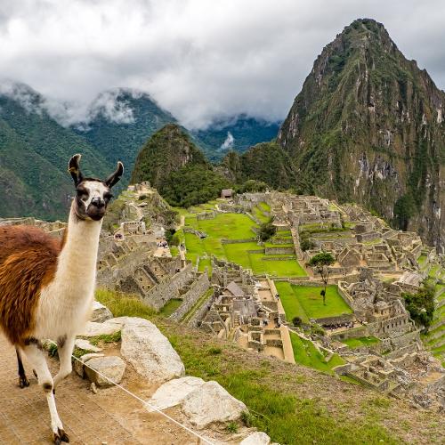 Lama in den Ruinen von Machu Picchu