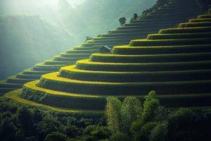 Malaysia - Terrassen-Landschaft