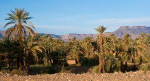 Marokko - Blick aus einer Oase in die Wüste