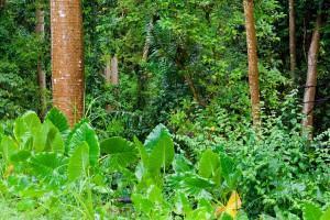 Naturreisen - Tropische Dschungelvegetation