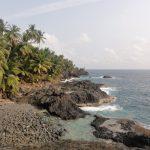 Felsenküste Palmen