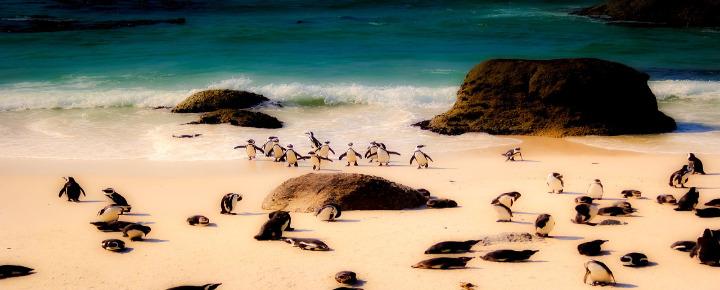 Fahrradreise Kapstadt - Port Elizabeth