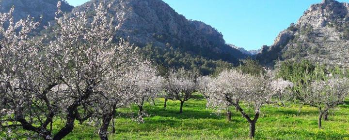 Mallorca - Wandertouren an der Südwestküste