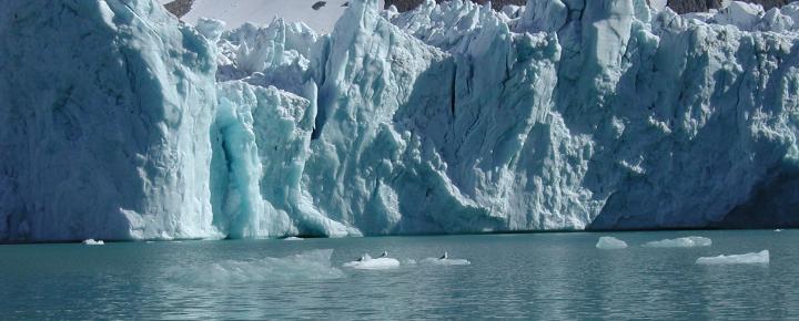 Kreuzfahrt durch das Reich der Eisbären