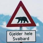 Verkehrsschild Eisbären