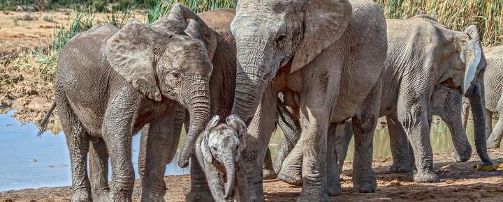 Safari-Reise durch Südafrikas Nordosten