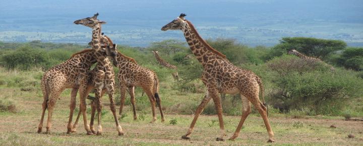 Serengeti, Usambaraberge und Selous-Nationalpark