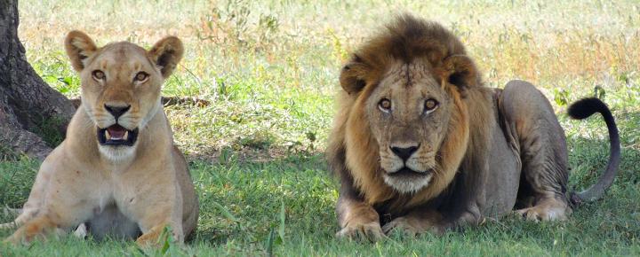 Usambaraberge, Safari und Sansibar