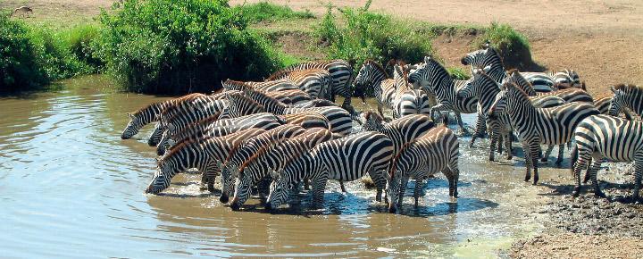 Safari - Wanderungen - Sansibar