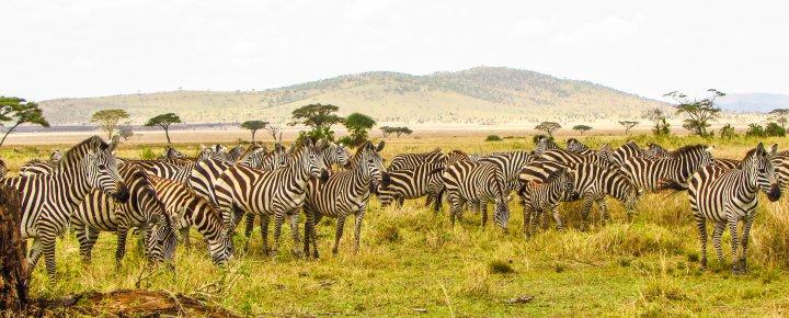 Serengeti - Safari - Sansibar