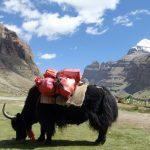 Yak vor Kailash