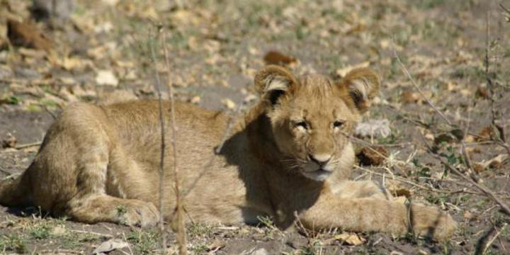 Safari und Bootsfahrten - Caprivi, Okavango, Chobe