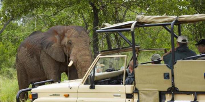 Krüger Nationalpark und Garden Route