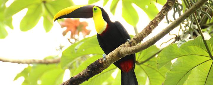 Aktivreise Kuba & Costa Rica