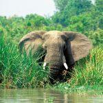 Elefant am Ufer