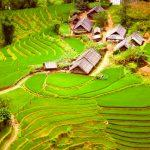 Dorf in Reisfeldern